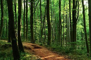 Belgrad Forest, Belgrad Ormanı