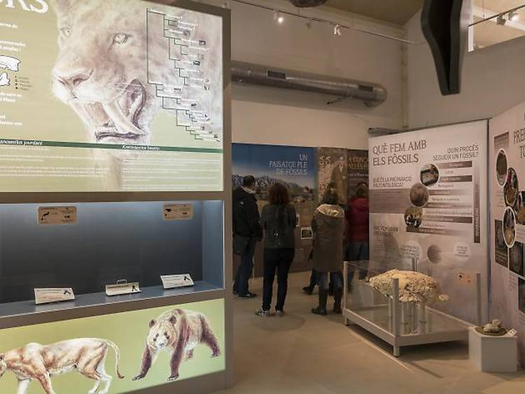 Importants jaciments paleontològics