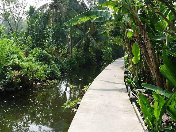 "Cycle around Bangkok's ""Green Lung"""