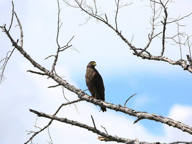 Birds at Kumana National Park