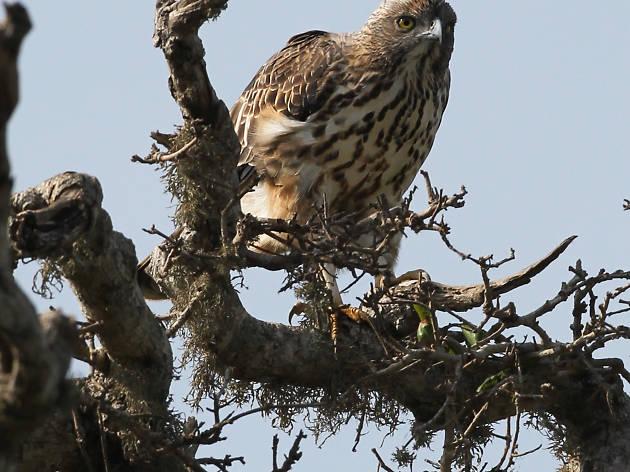 Bundala National Park