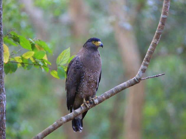 Wilapattu National Park