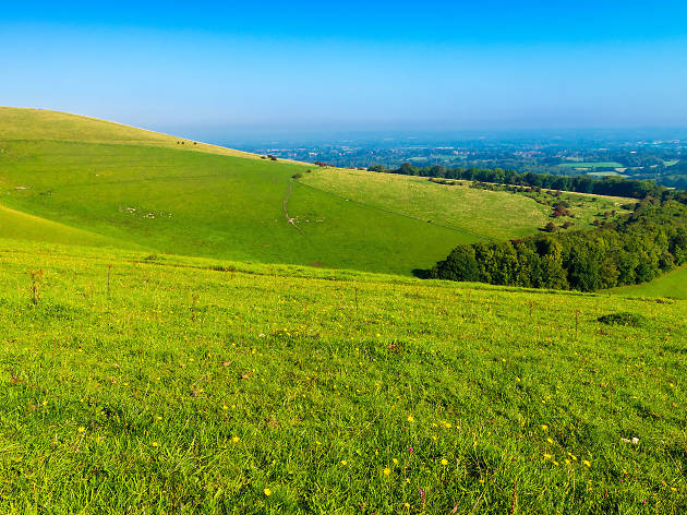 Chanctonbury Ring, West Sussex