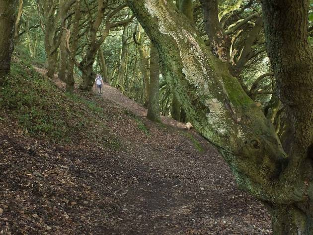 Mawnan Wood, Cornwall