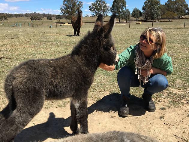 Alpaca Magic Canberra