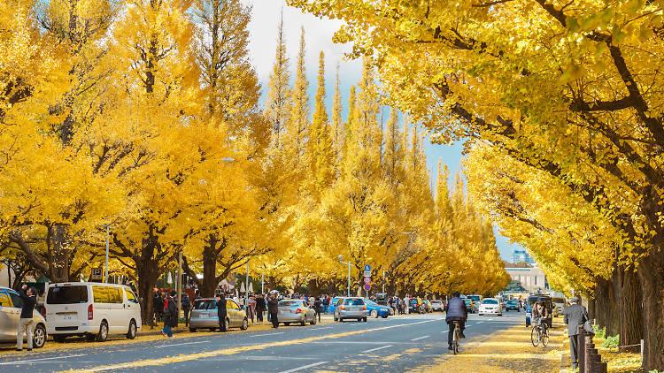 Icho Namiki Street