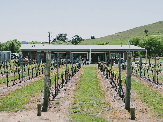 Four Winds Vineyard Rows