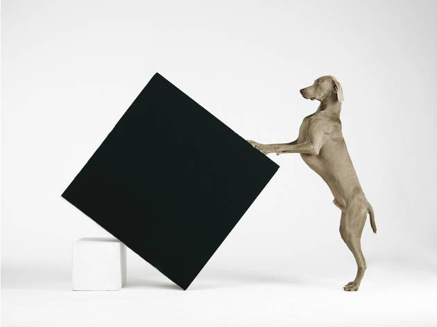 William Wegman, 'Constructivism', 2014. Collection of the artist.