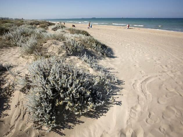 Playa L'arbre del gos