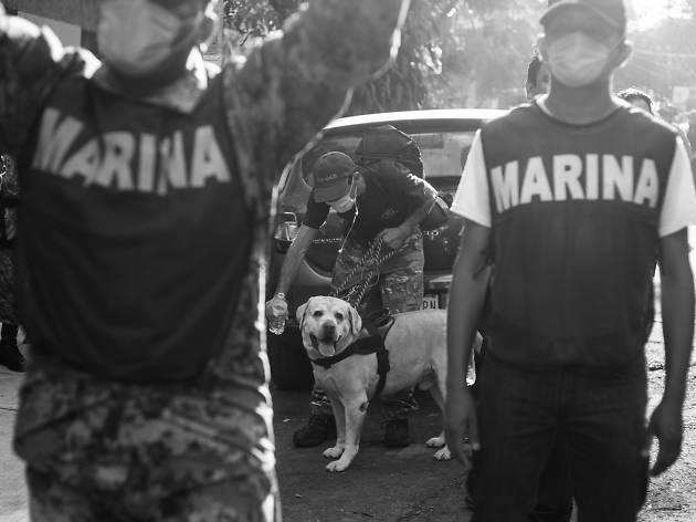Frida: perrita rescatista