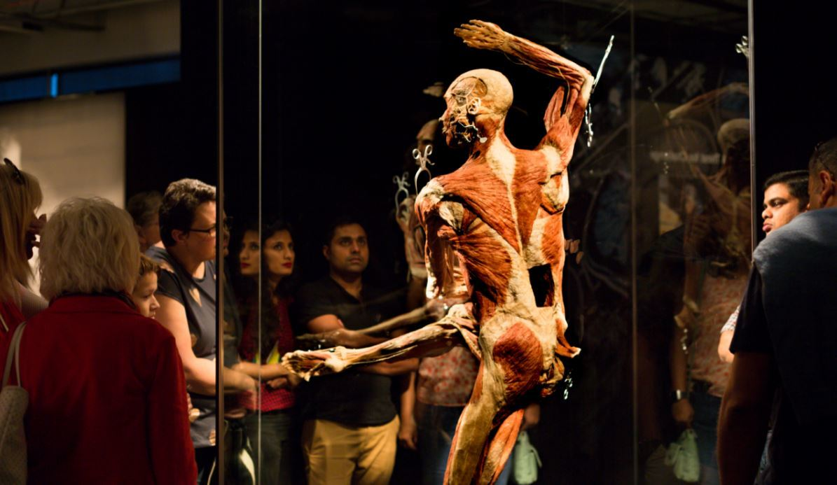 People look at a preserved human specimen.