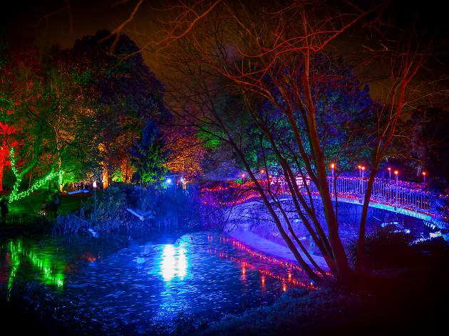 Syon Enchanted Woodland