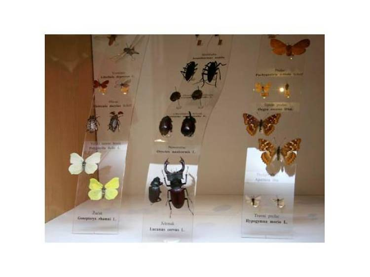 Delve into the world of insects