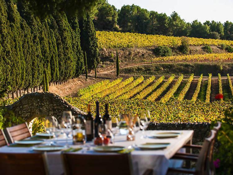 Count the cava bubbles in the Penedès Wine Region