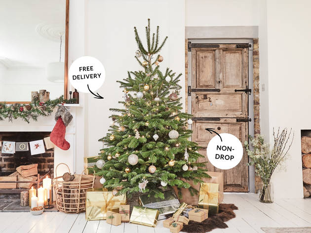 Buy a Christmas tree and get a free indoor plant with Patch