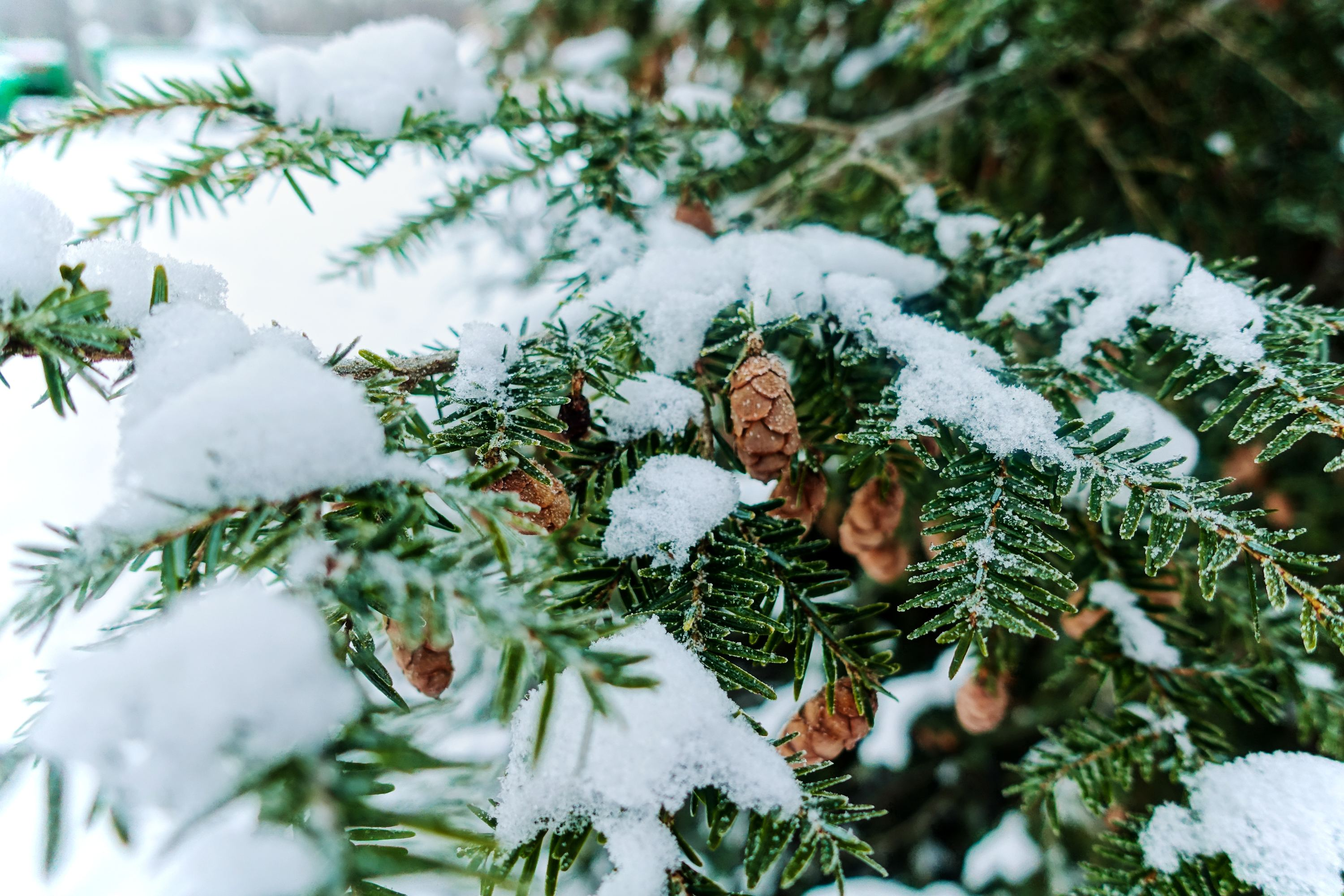 12 Best Christmas Tree Farm Spots Near NYC To Visit This ...