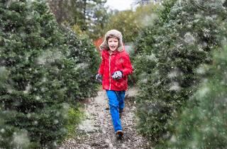 Christmas Tree Farms Near Me.12 Best Christmas Tree Farm Spots Near Nyc To Visit This Winter