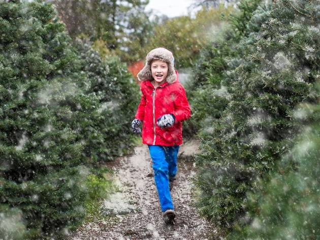 Christmas Tree Farm Photos.10 Best Christmas Tree Farms For Nyc Families