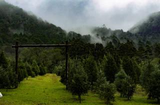 Bosque de Árboles de Navidad en la Amecameca, Estado de México
