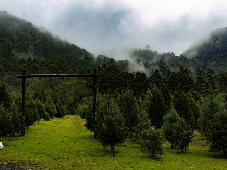Reforestación en el Parque Ejidal San Nicolás Totolapan