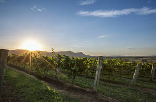 Vineyards in the Hunter.