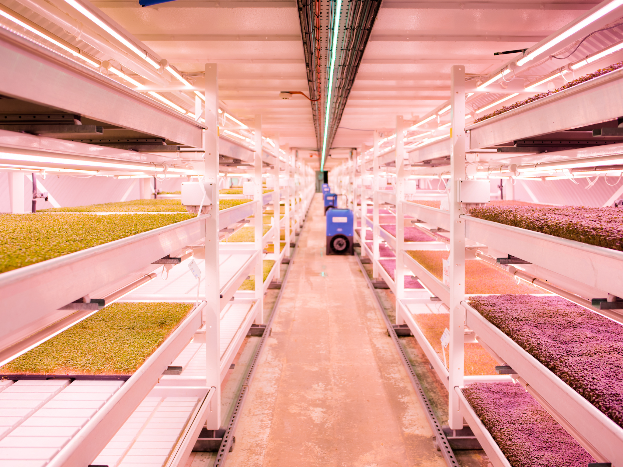 Meet the London-based start-ups shaping the future of food
