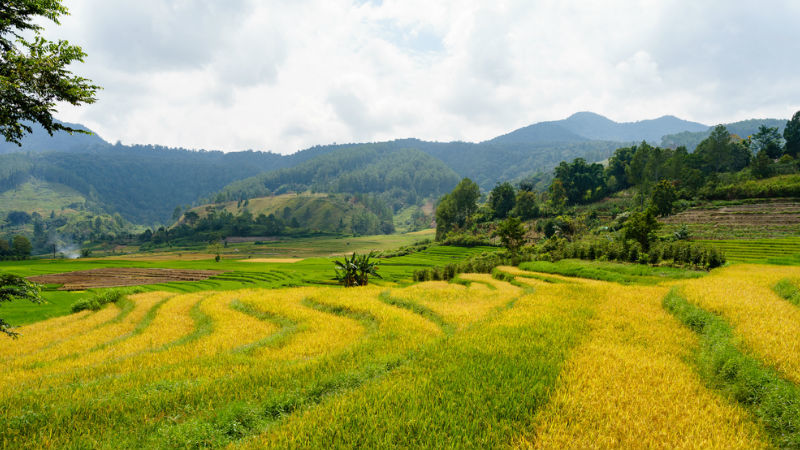 Adventures in North Sumatra