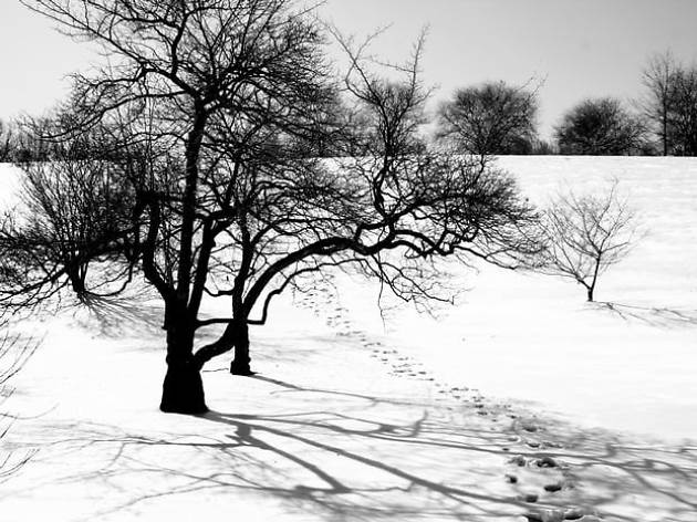 Arnold Arboretum in the snow