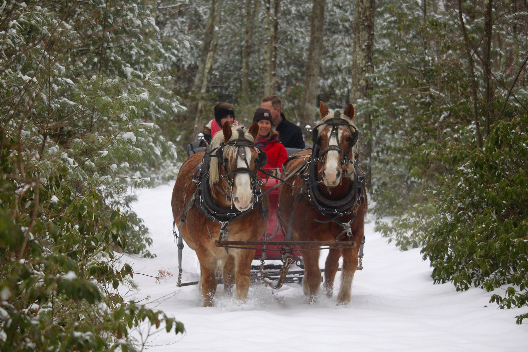 The best sleigh rides in New York and beyond