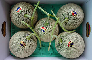 Expensive melons Japan