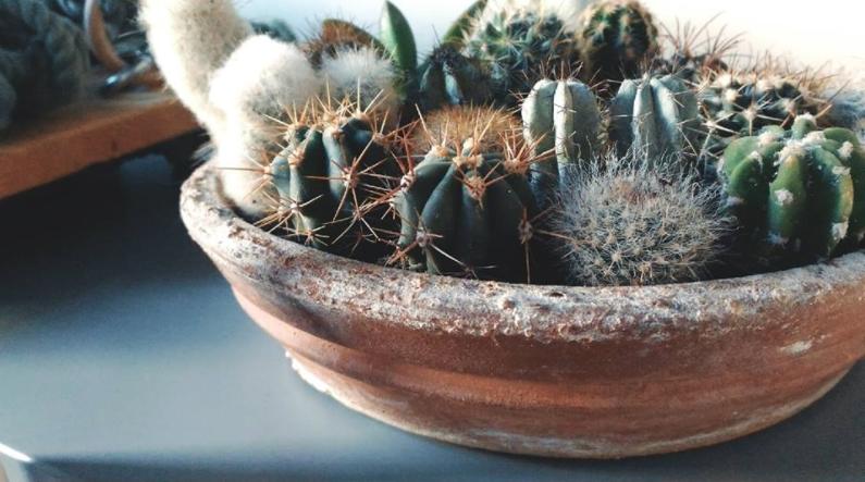 vintage cactus