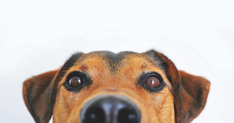 ExpoZoo recebe a primeira edição do concurso 'O Meu Animal Tem Talento'
