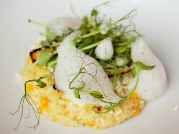 corn risotto at Luce