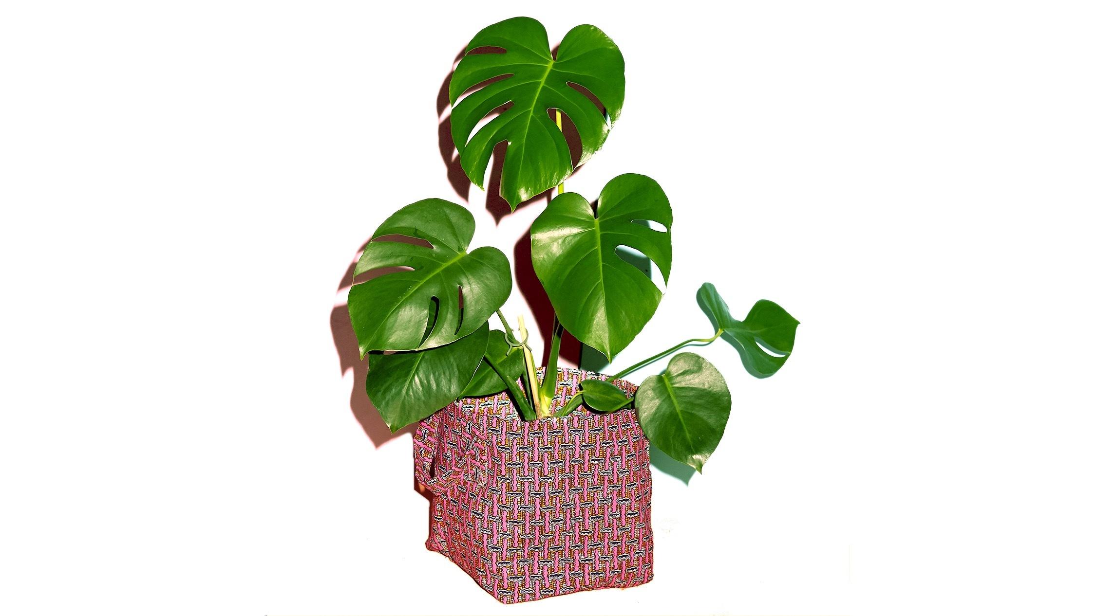 Plant Bag by Yevu