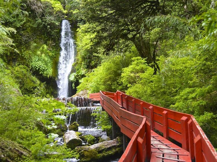 熱帯雨林にある温泉に入る。