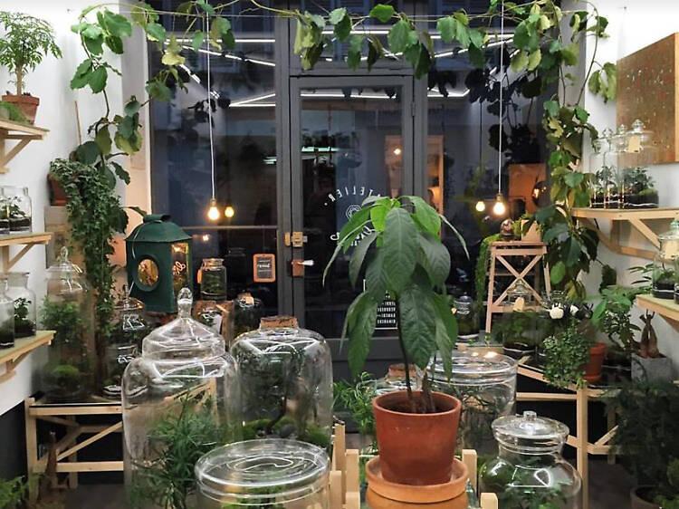 Des terrariums encore et toujours à la mode