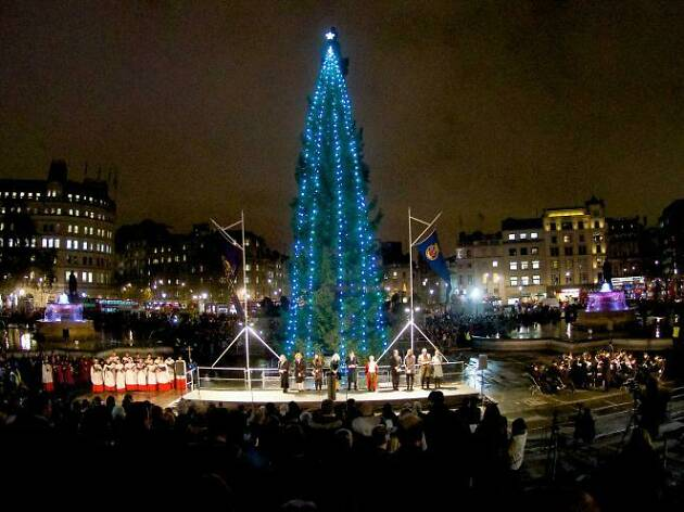 The Norwegian fir in Trafalgar Square