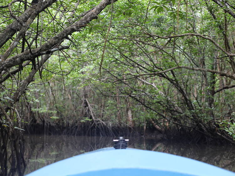 Go on an eco adventure with the Mangrove Discovery Tour