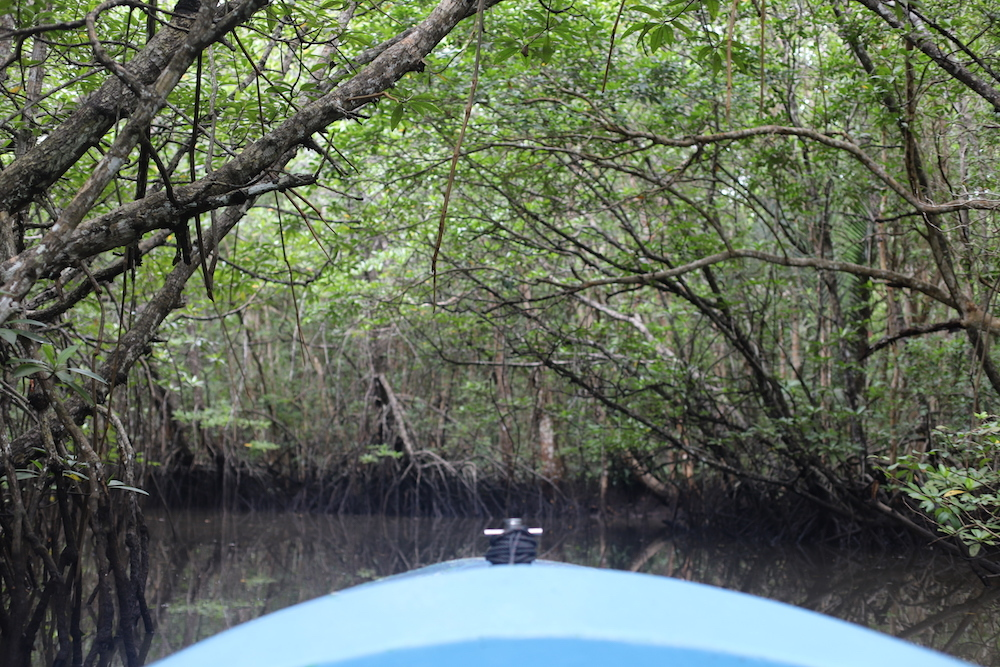 The best mangrove trails in Singapore to explore