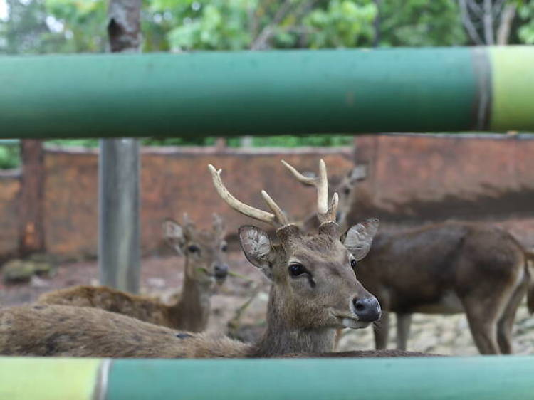 Visit rescued and endangered animals at Safari Lagoi