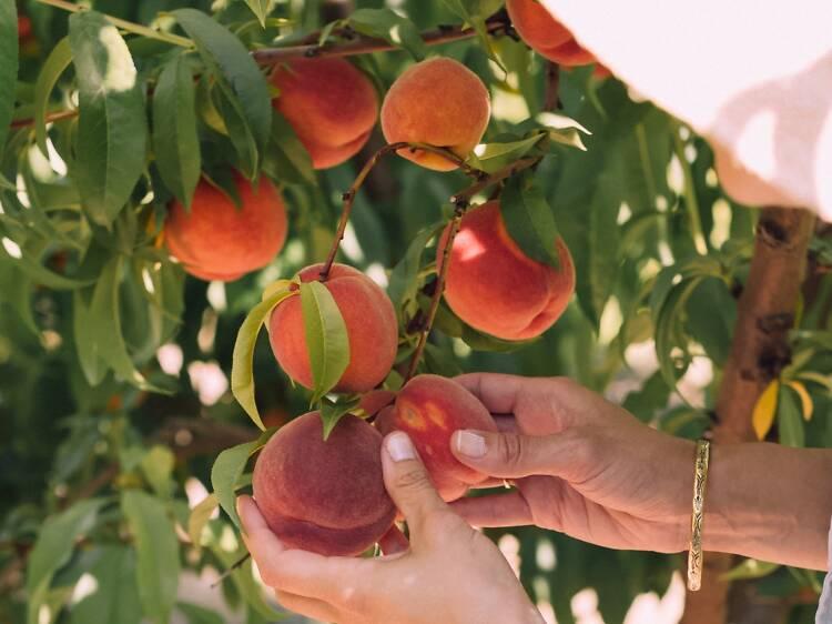 Naturipe Fruits