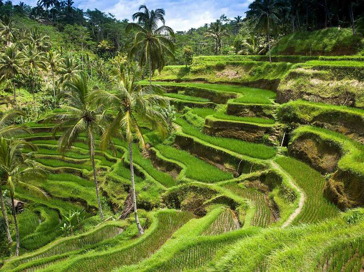 Bali (Indonèsia)