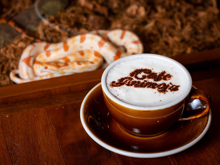 Café Animojo