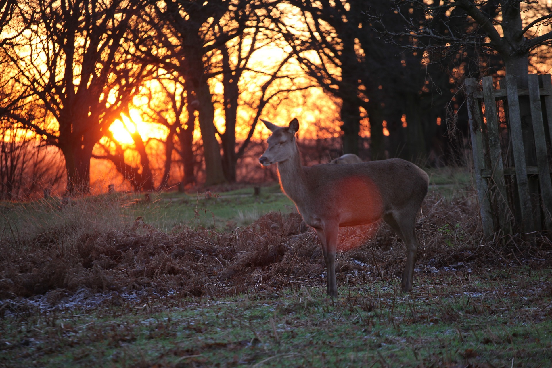 Where to see wildlife in London year-round