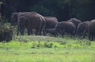 Elephants at Wasgamuwa