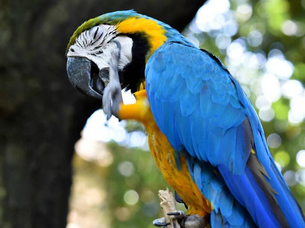 Guacamaya en aviario