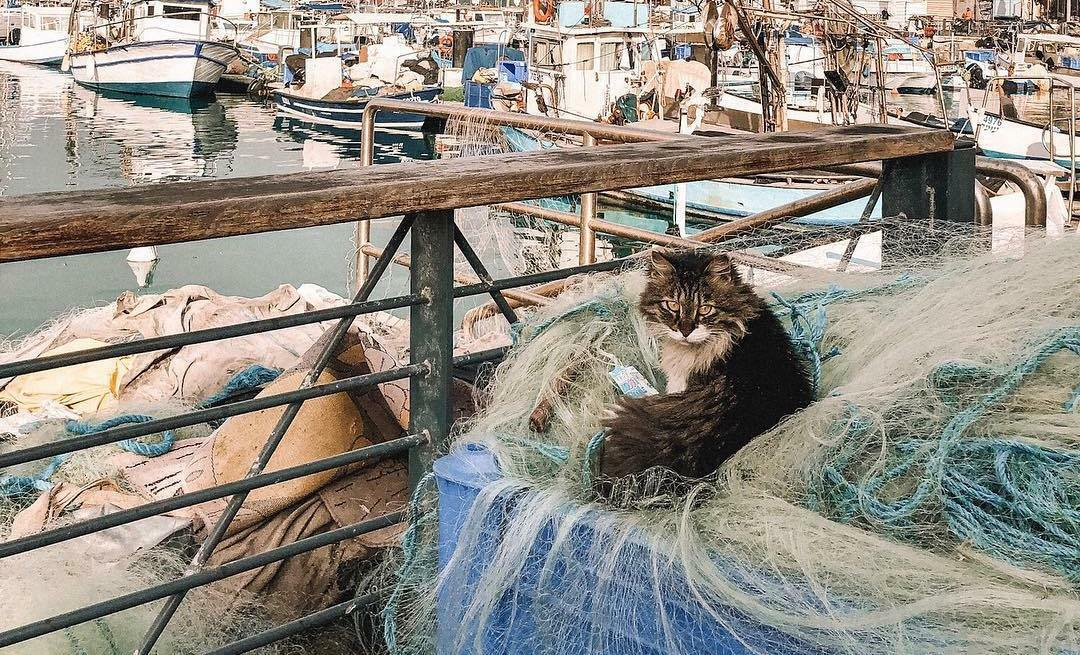 Cats of the Holy Land: a glimpse into Tel Aviv's most photogenic cats