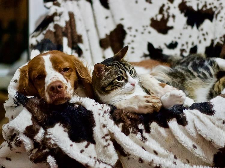 Para focinhos exigentes: serviços e produtos para animais de estimação