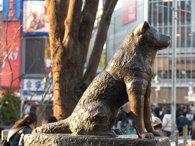 10 things you didn't know about Hachiko
