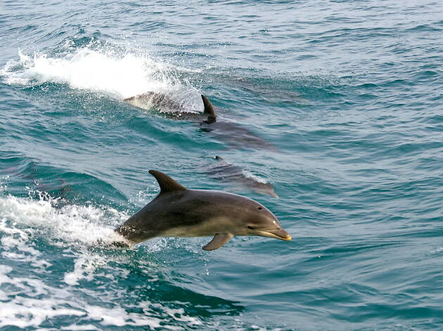 Dolphins seen from Searoad Ferries